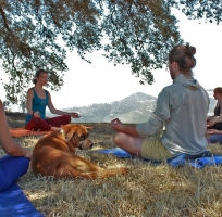 Happy Beings - Yoga & Meditation in Nature